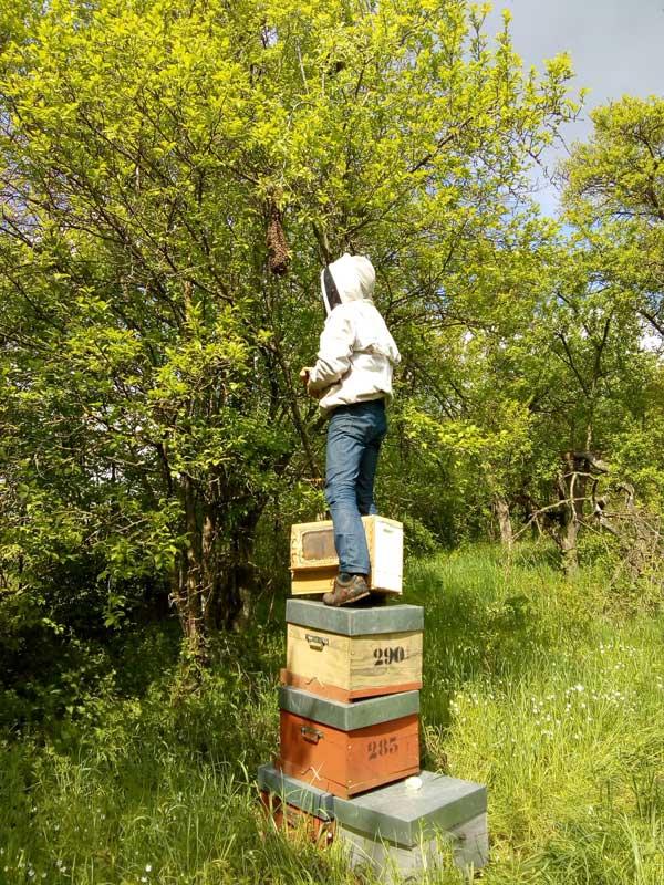 gaël volland apiculteur dans les Vosges
