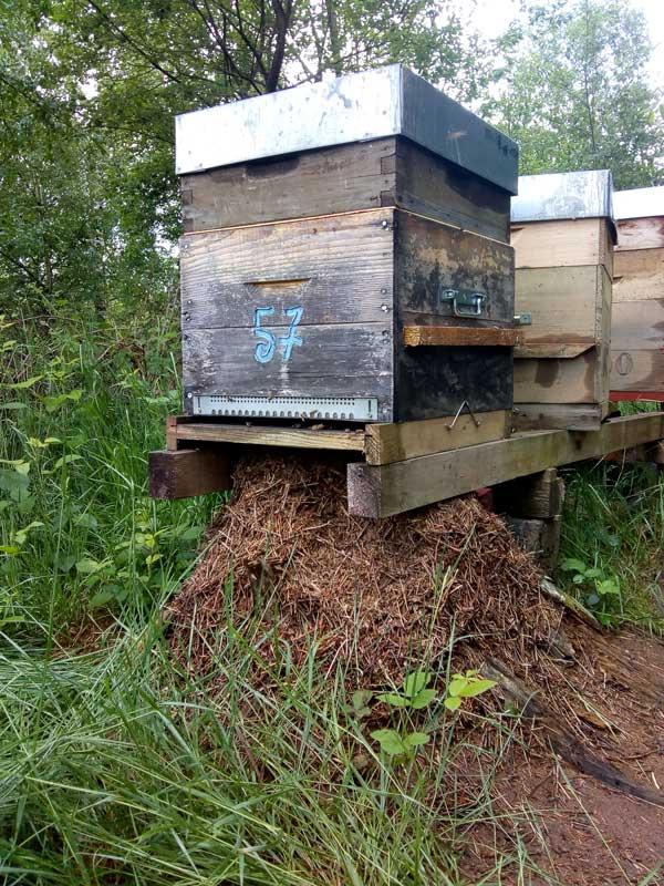 abeilles et fourmis