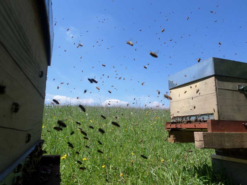 abeilles en vol