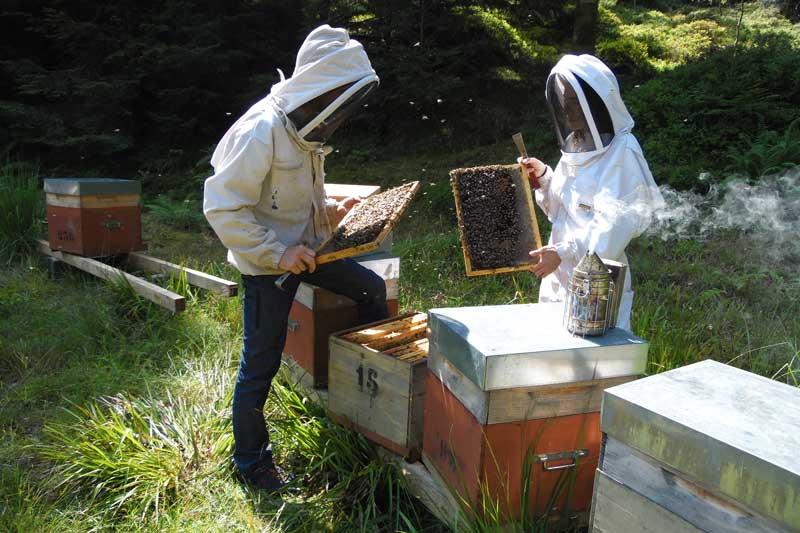 apiculteurs vosges