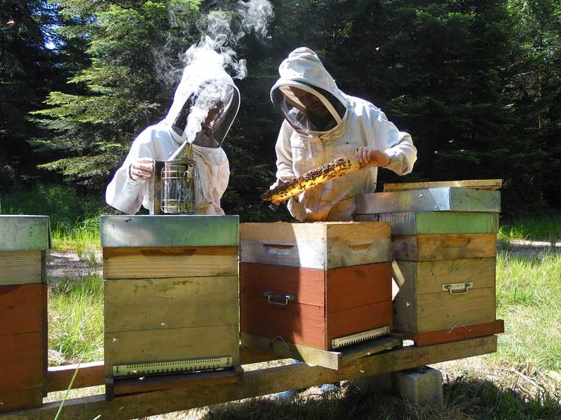 apiculteur vosges