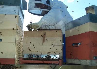galerie apiculteur