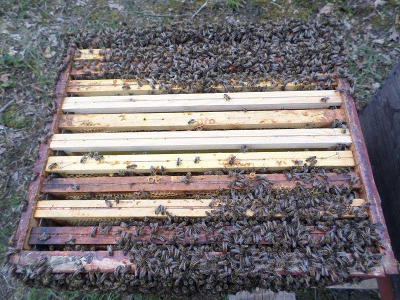 cadres de ruche