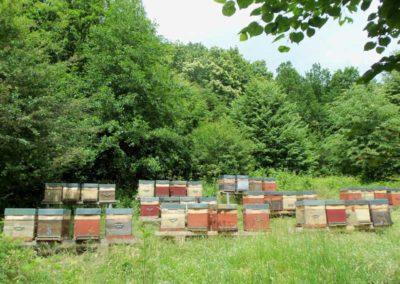 notre rucher en Alsace