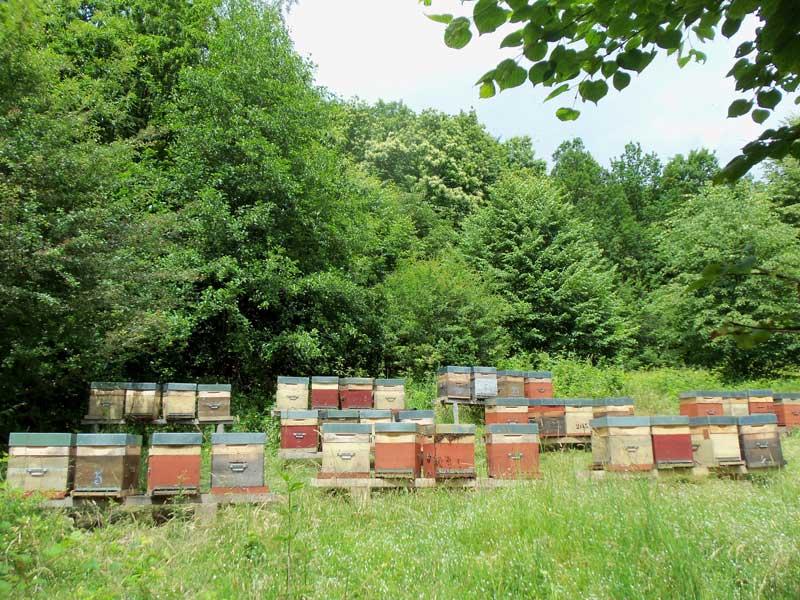 rucher en Alsace - miel de châtaignier