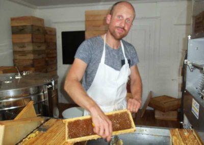 Extraction du miel de châtaignier