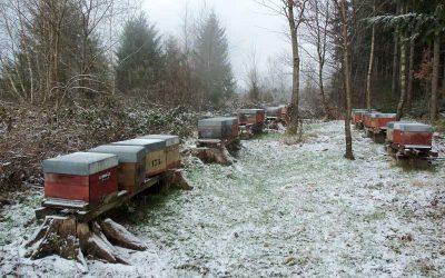 L'hivernage des colonies
