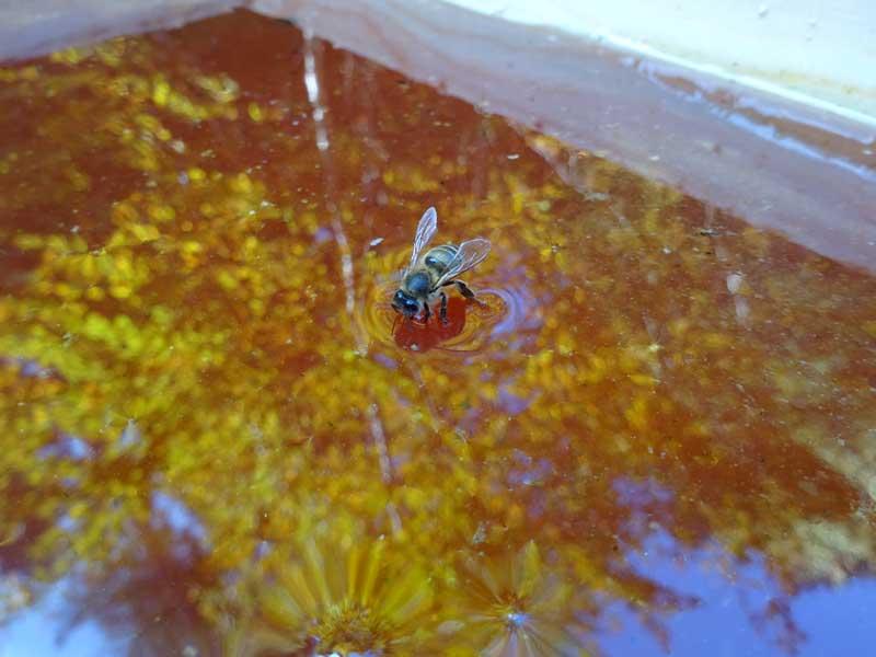 nourissement au miel