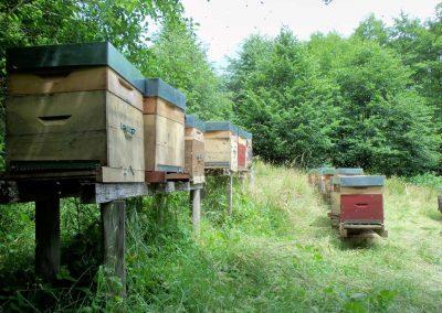 un de nos ruchers en Alsace