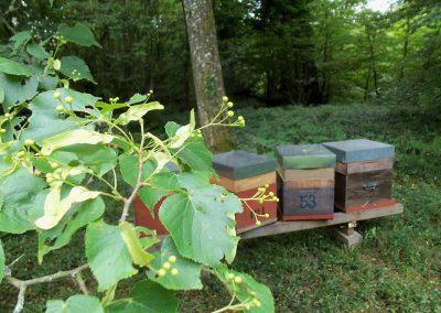 rucher en Meurthe et Moselle - miel de tilleul