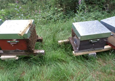 Barbes d'abeilles